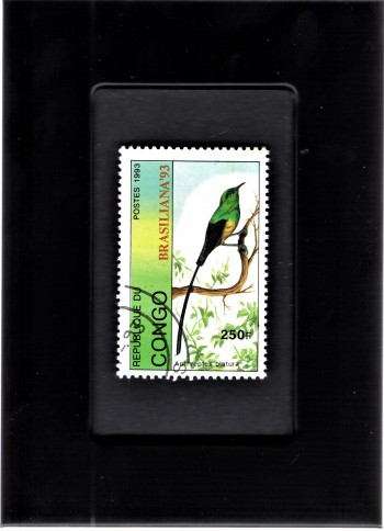 Image for Tchotchke Framed Stamp Art Collectable Postage Stamp- Pin-Tailed Whydah